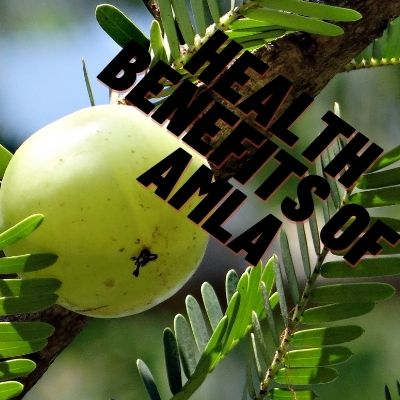 The Health Benefits of Amla