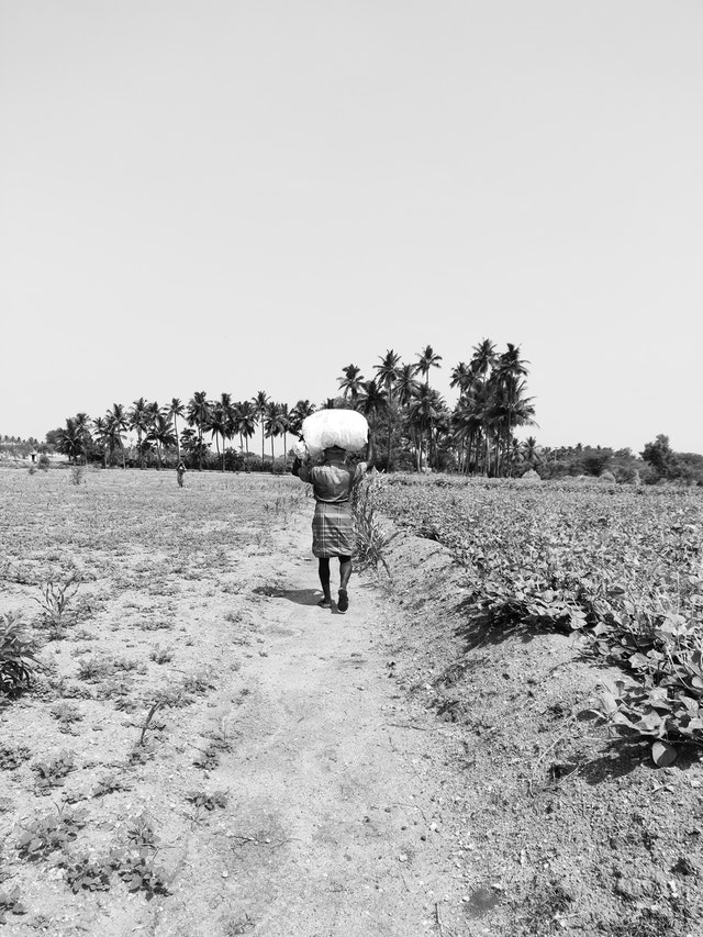 The Farmers of India – The Backbone of India