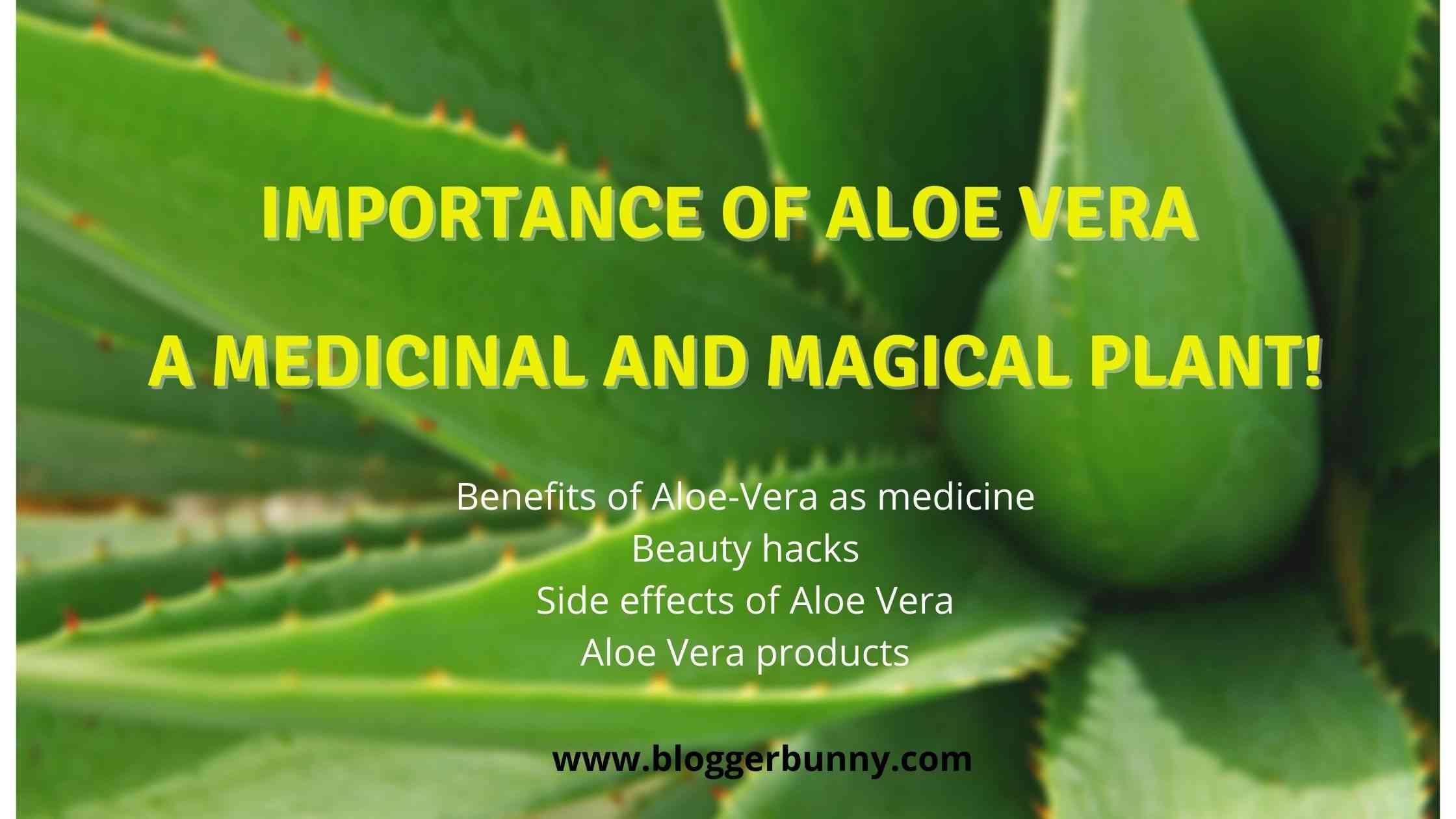 Importance of Aloe Vera – A Medicinal And Magical Plant!