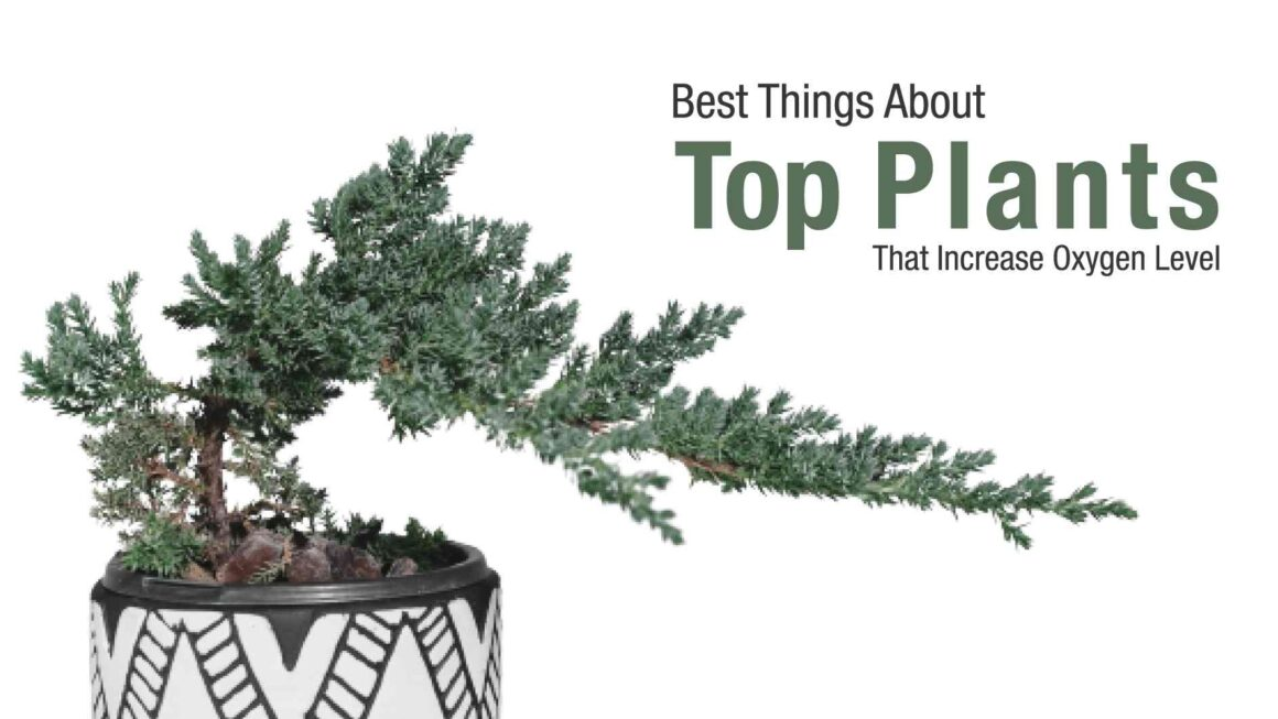 Top Plants That Increases Oxygen Level